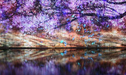 Kyoto, Nijo Castle, illumination – Naked Flower 2021