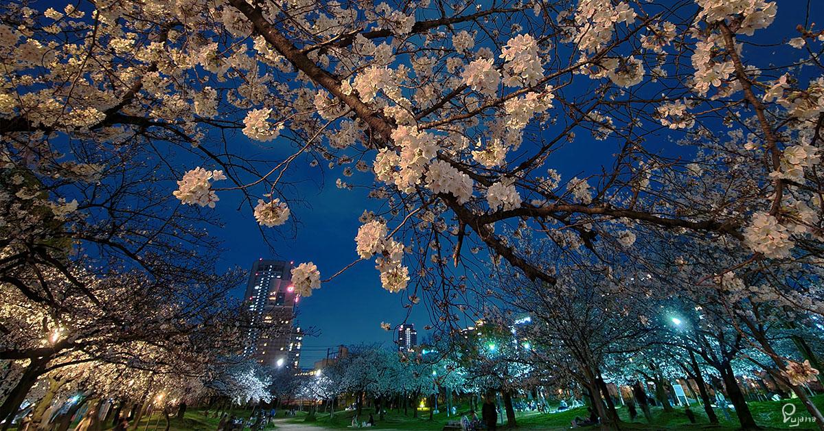 Osaka, Kema Sakuranomiya Park, Sakura 2021