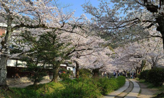 Kyoto, Philosopher's Path, Sakura 2021