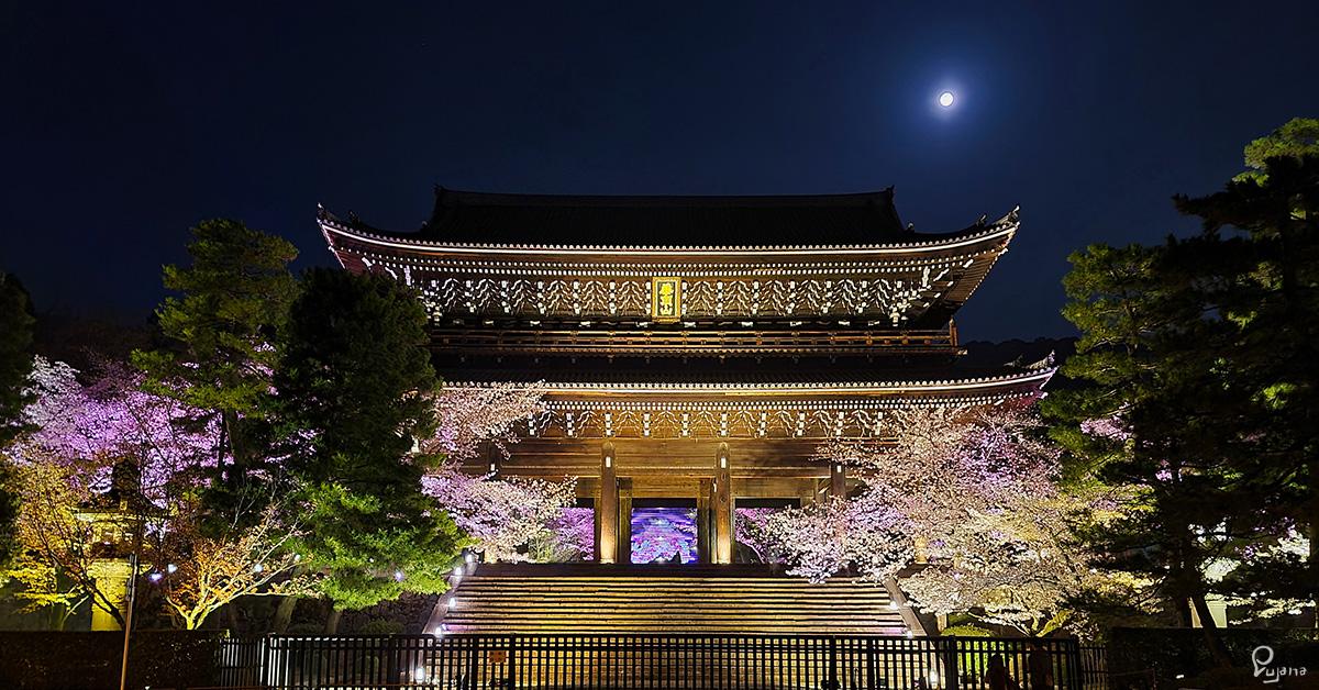 Kyoto, Chion-in, Sakura 2021