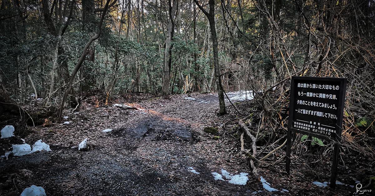 Kyoto to Nagano, Part 6: Yamanashi, Fuji Caves & Aokigahara (Suicide Forest)